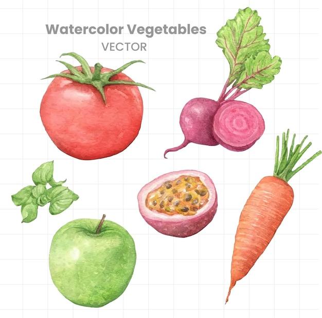 白い背景に野菜の水彩画を設定します