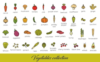 Vegetables collection. Healthy vegetarian food icons set