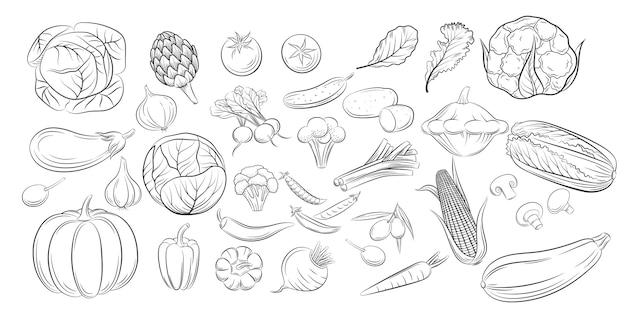 野菜落書き図面コレクション。刻まれたスタイルのコレクション農産物レストランメニュー、市場ラベル。ビンテージスケッチスタイルアイコンは、白い背景に分離された黒で野菜を設定します。