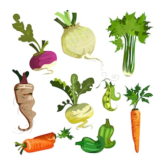 Vegetables from garden set