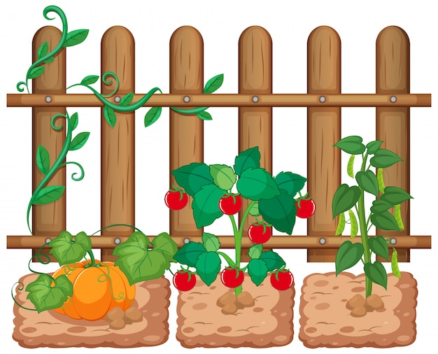 Vegetables growing in the garden on white background