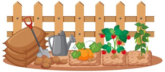白い背景の上の庭で育つ野菜