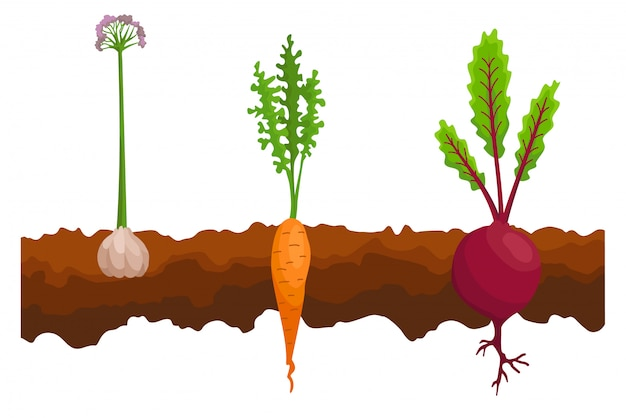 Овощи растут в земле.