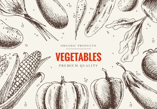 Vegetables hand drawn. market menu design. organic food poster. sketch illustration. vegetarian set of organic products