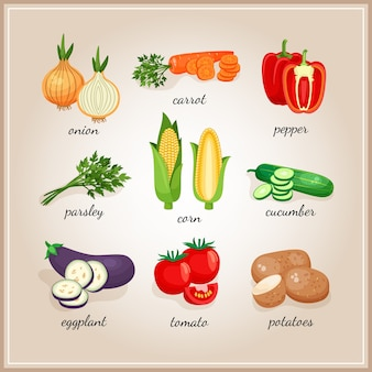 野菜の材料。それぞれがテキストで署名された野菜の食材のコレクション。ベクトルイラスト