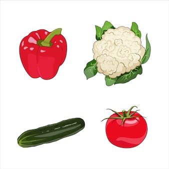 Vegetables set. cucumber, cauliflower, bell pepper paprika, tomato organic farm food. healthy raw vegetarian vegan diet.   illustration isolated
