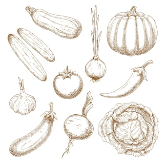 Vegetables sketch icons for old fashioned recipe book or menu design
