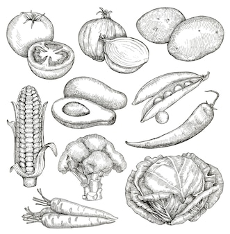 Vegetables, sketches, hand drawing, vector set