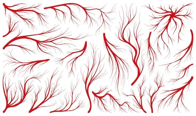 인간의 벡터 라인 아이콘 세트의 정맥입니다. 흰색 바탕에 혈액의 컬렉션 벡터 일러스트 동맥입니다. 웹 디자인을 위한 정맥의 격리된 선 그림 아이콘 세트입니다.