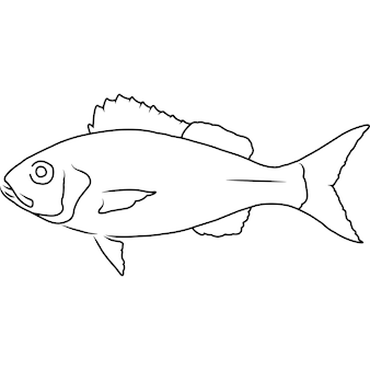Vermilion snapper hand sketched hand drawn vector clipart