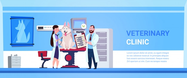 Vet doctors examining dog in clinic office veterinary medicine concept banner