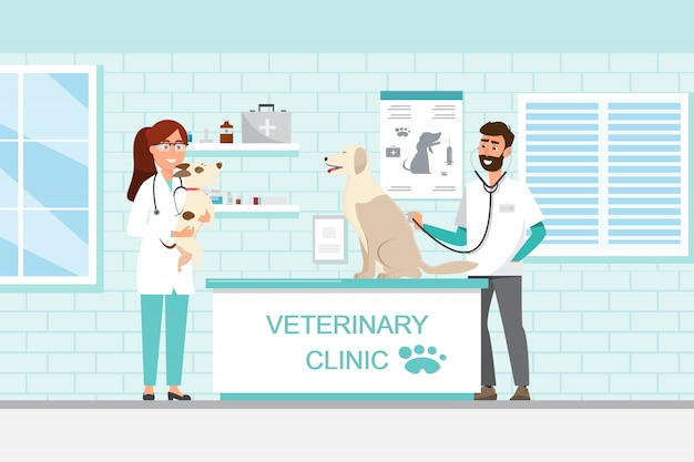 수 의사와 수 의사 진료소에 카운터에 개와 고양이와 의사