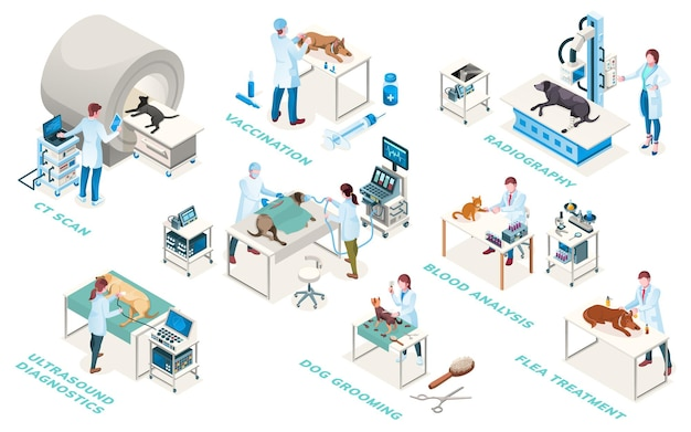 Veterinarian clinic doctors, diagnostic and treatment services, isometric icons. veterinary medicine surgery, medical examination ultrasound, blood analysis, radiography and vaccination