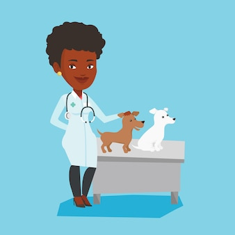 Veterinarian examining dogs  .