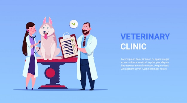 Veterinarians examine dog in veterinary clinic animal medicine and care concept