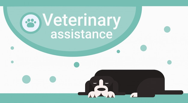 Veterinary assistance clinic for animals pets vet service banner