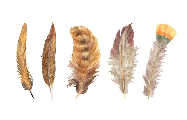 鮮やかなフェザーセット。鳥の羽。自由奔放に生きる手羽先。水彩イラスト。
