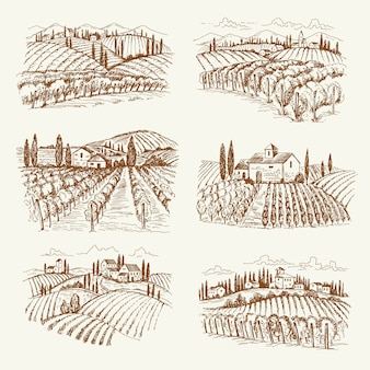 Vineyard landscape. france or italy vintage village wine vineyards  hand drawn illustrations