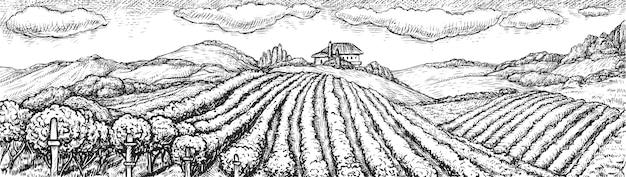 ブドウ畑の風景です。手描きの素朴なブドウ畑のシームレスな農村風景スケッチ落書きイラスト。丘とワイナリーの建物の背景につるブドウブッシュプランテーションフィールド。ブドウ栽培