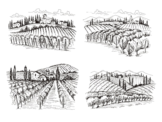 Vineyard. old france chateau wine landscape hand drawn illustrations for labels design projects