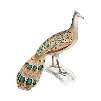 Vintage animal illustration