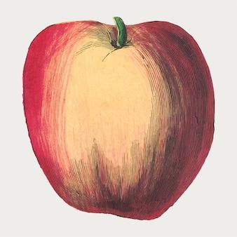 Stampa xilografica vintage di frutta mela, remix di opere d'arte di marcius willson e na calkins