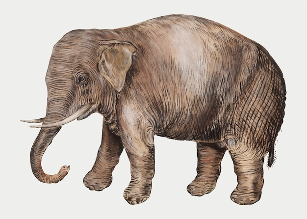Vintage asian elephant illustration in vector