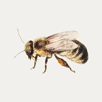 Vintage bee illustration vector