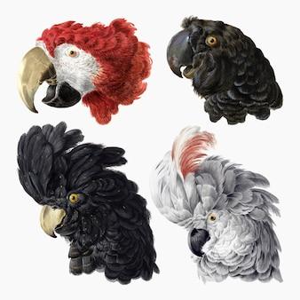 Aertschoumanによるアートワークからリミックスされたヴィンテージの鳥のイラストベクトルセット