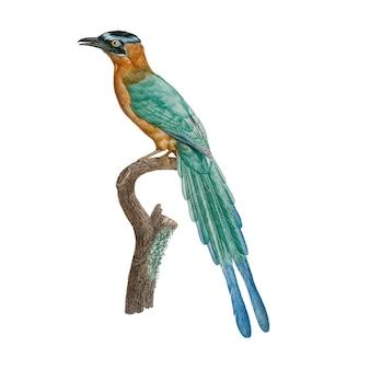 Иллюстрация винтажной птицы