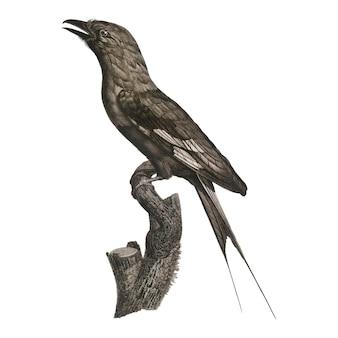 Vintage bird illustration