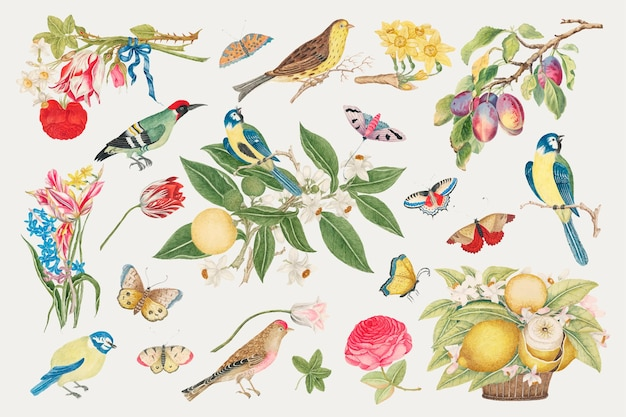Vintage birds and blossoms illustration, remixed from the 18th-century artworks from the smithsonian archive.