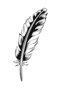 Винтаж черный перо, изолированные на белом фоне