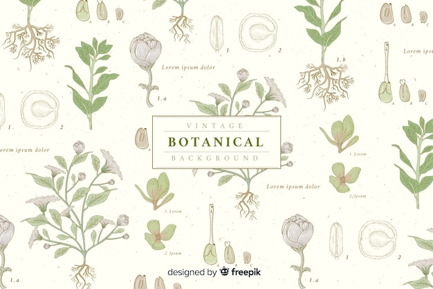 Vintage botanical background