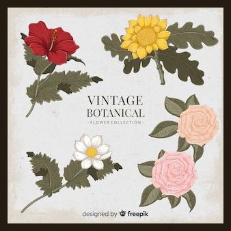 Vintage botanical flower collection
