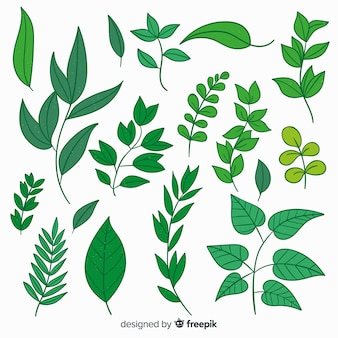 Collezione vintage di foglie botaniche
