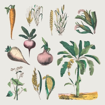 빈티지 식물 벡터 아트 인쇄 세트, marcius willson 및 na calkins의 작품에서 리믹스