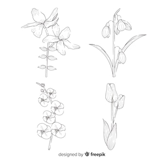 Vintage botany flower collection draw