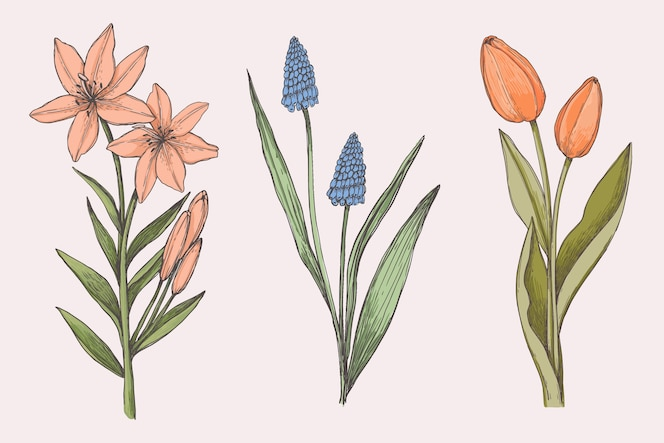 ヴィンテージ植物の花コレクションを描く