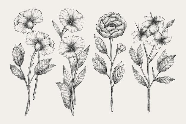 Vintage botany flower collection