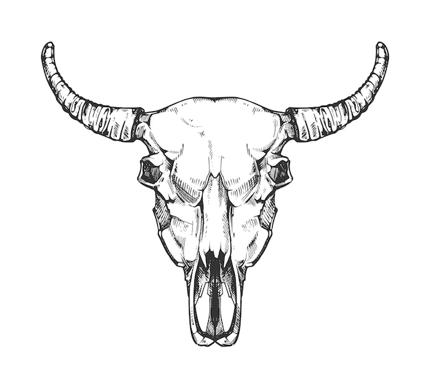 Vintage buffalo skull sketch. bull animal head bones in hand drawn style. cow head with horn