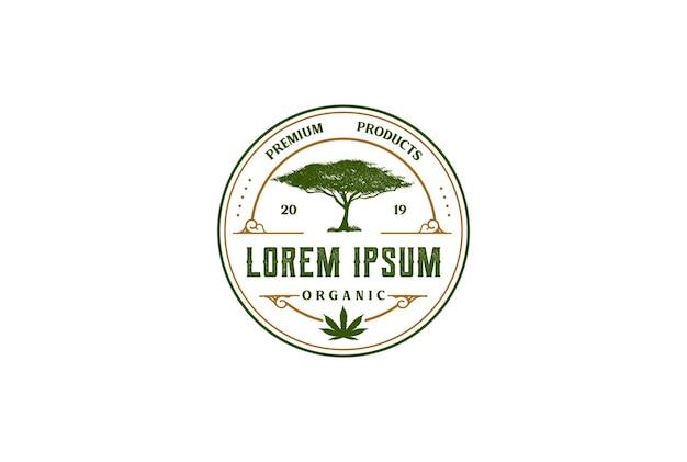 마리화나 대마초 대마 cbd 오일 로고 디자인 벡터에 대한 빈티지 원형 라운드 아카시아 나무 배지 상징