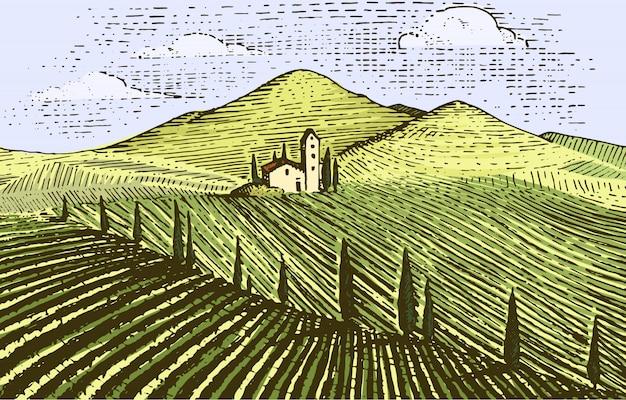 ヴィンテージが刻まれた、手描きのブドウ畑の風景、タスカニーフィールド、古い探しているスクラッチボード