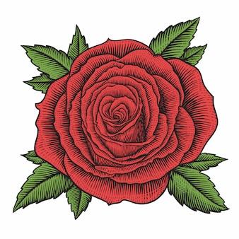 Винтаж гравюра розы цветок иллюстрации