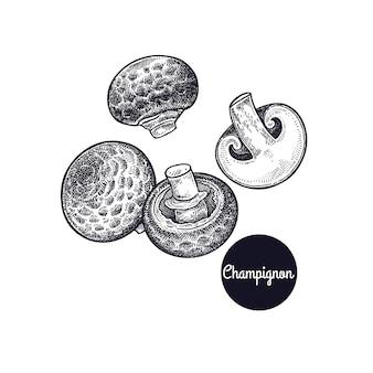 Старинные гравюры с грибами шампиньон.
