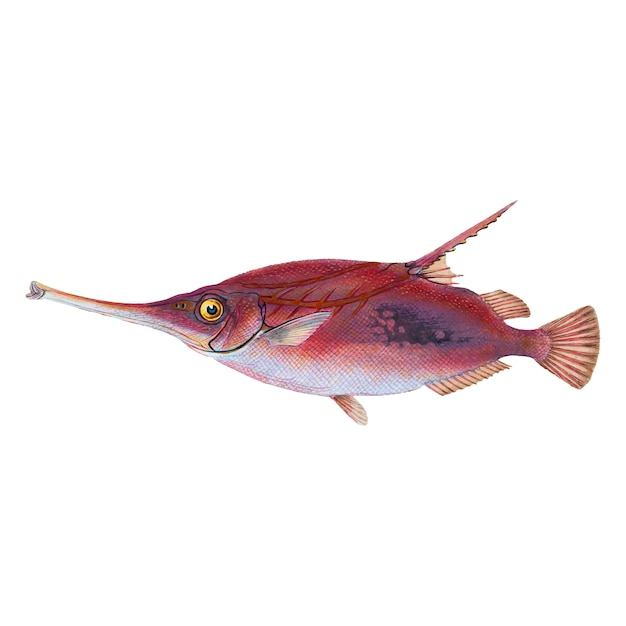 Vintage fish illustration