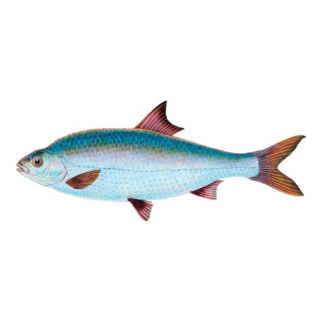 Винтажная рыба