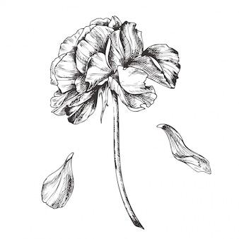 Vintage floral  illustration, etching hand drawn clip art.