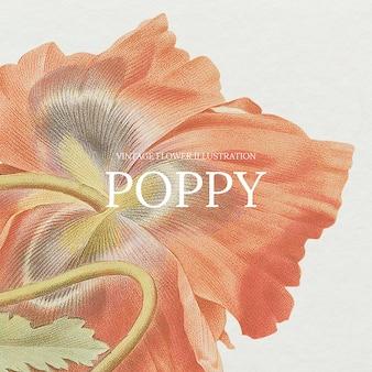 공개 도메인 작품에서 리믹스된 양귀비 배경의 빈티지 꽃 템플릿 그림