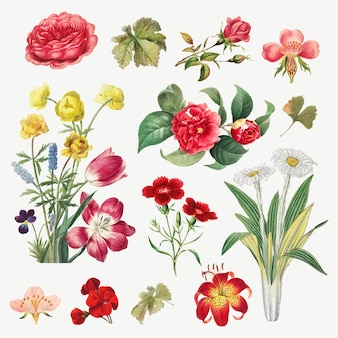 Vintage flower botanical illustration set